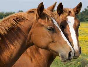 talking horse racing