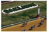 Don 'At The Gate' Phillips Expert Selections – Oaklawn!!  At a Great Introductory Price – $57 for 57 Days of Professional Selections!